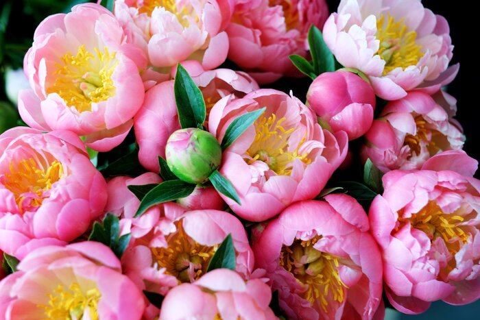 Facts About Flowers: Peony Edition - Southern Living