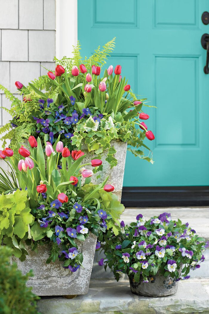 Pansies viola gardens southern living dress up the front door mightylinksfo