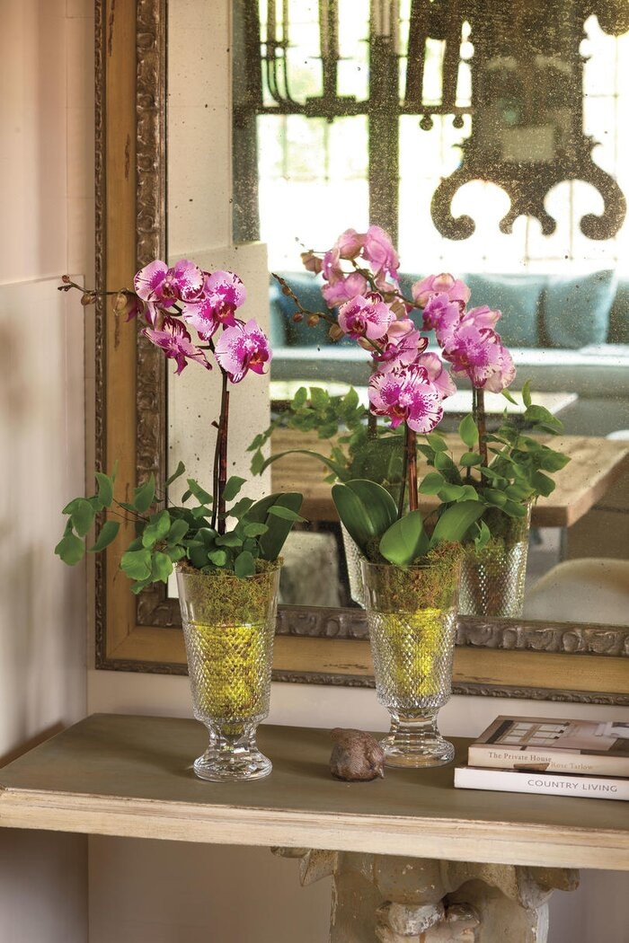 Best indoor houseplants southern living moth orchids mightylinksfo