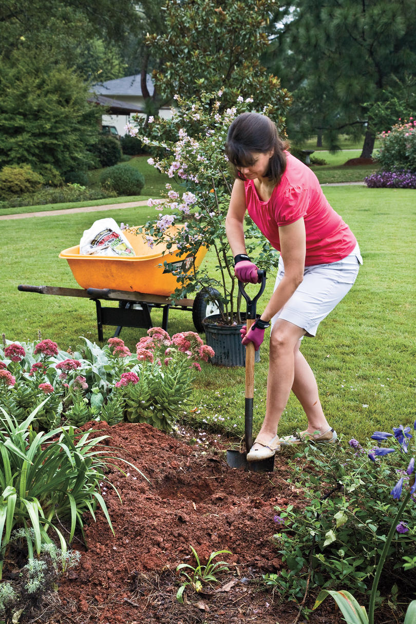 how to plant garden. How To Plant A Crepe Myrtle With Success: Step 1 Garden