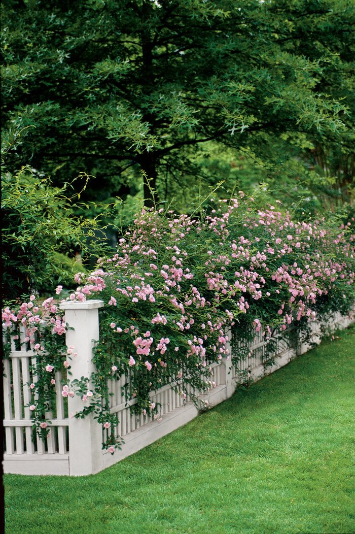 The souths best fragrant plants for your garden southern living rose mightylinksfo