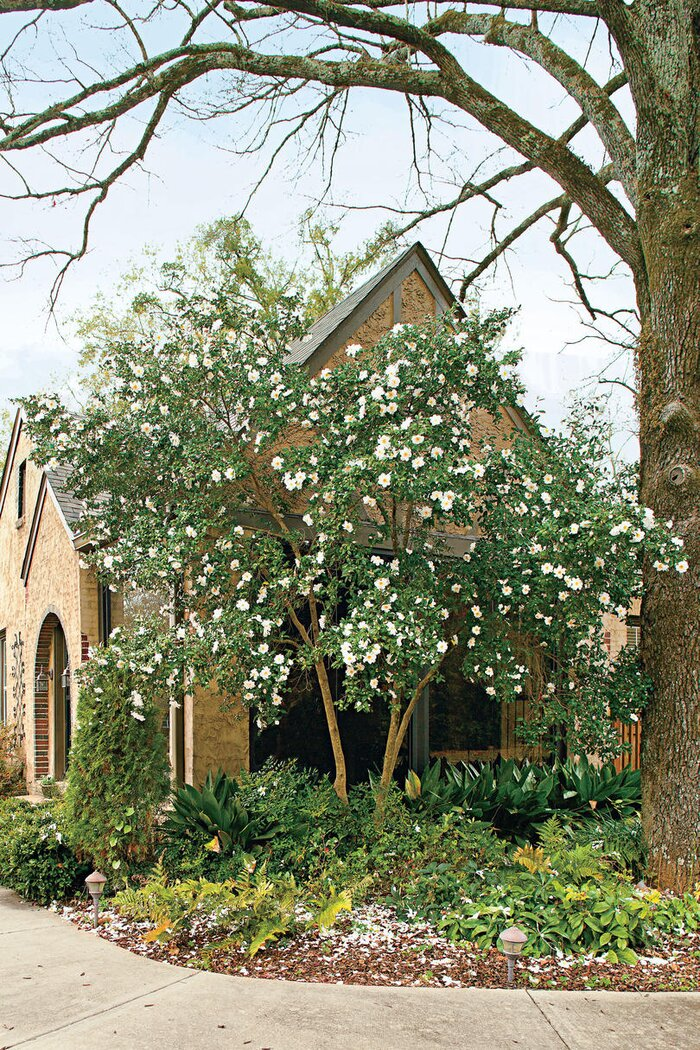 Classic Southern Plants - Southern Living