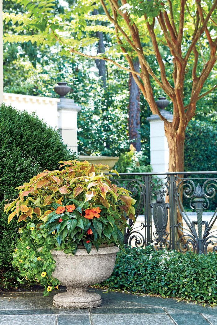 Spectacular container gardening ideas southern living orange and green container garden mightylinksfo