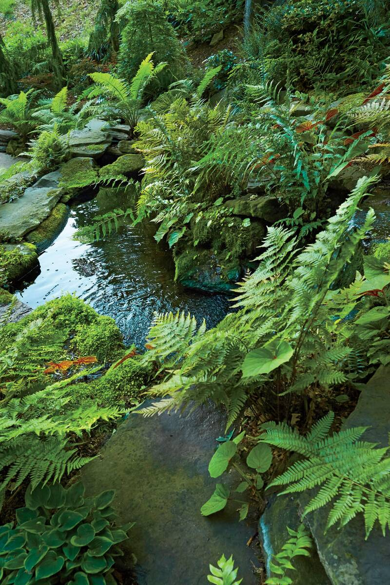 our favorite ferns for thriving in the southern heat southern living