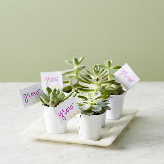 Mini Plant with 'Grow' Tag :)