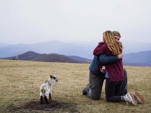 Man Proposes To Girlfriend With The Cutest Baby Goat Breaks The