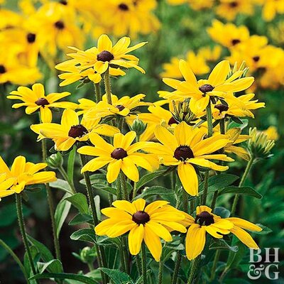 Planting Sunshine With Yellow Flowers
