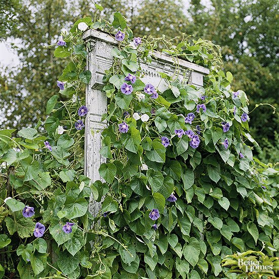 Trellises And Vine Supports You Can Build