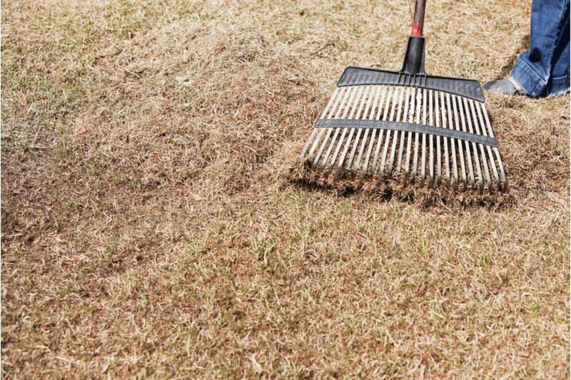 Dethatching And Aerating Your Lawn Sunset Magazine