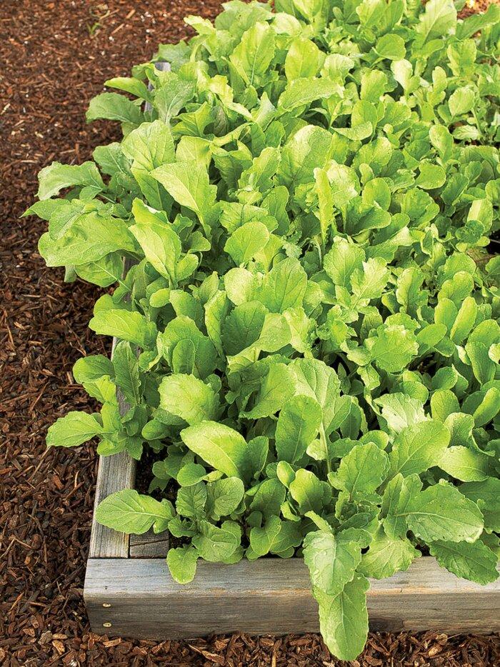 Winter Vegetable Gardening Guide - Sunset Magazine
