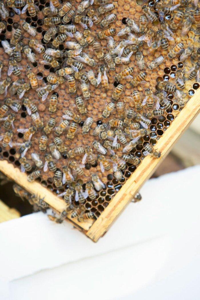 How To Raise Honeybees Sunset Magazine