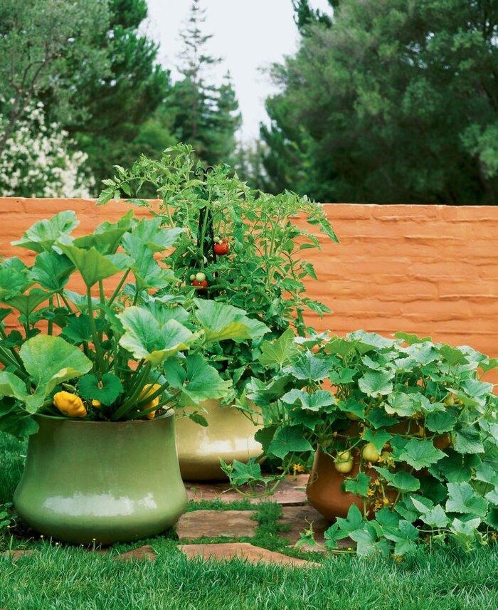 veggies in pots - Garden Pots