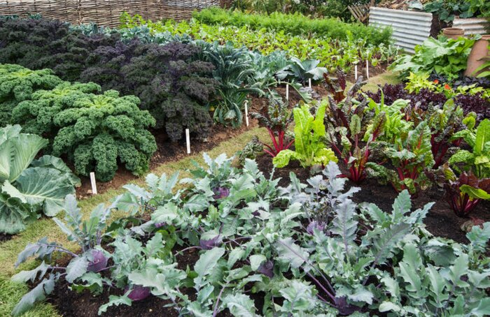 Our Guide to No-Till Gardening - Sunset Magazine