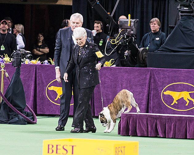 Westminster Dog Show 2016 results, photos: CJ wins Best in