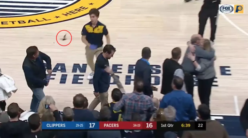 Bat at NBA game might have exposed some to rabies