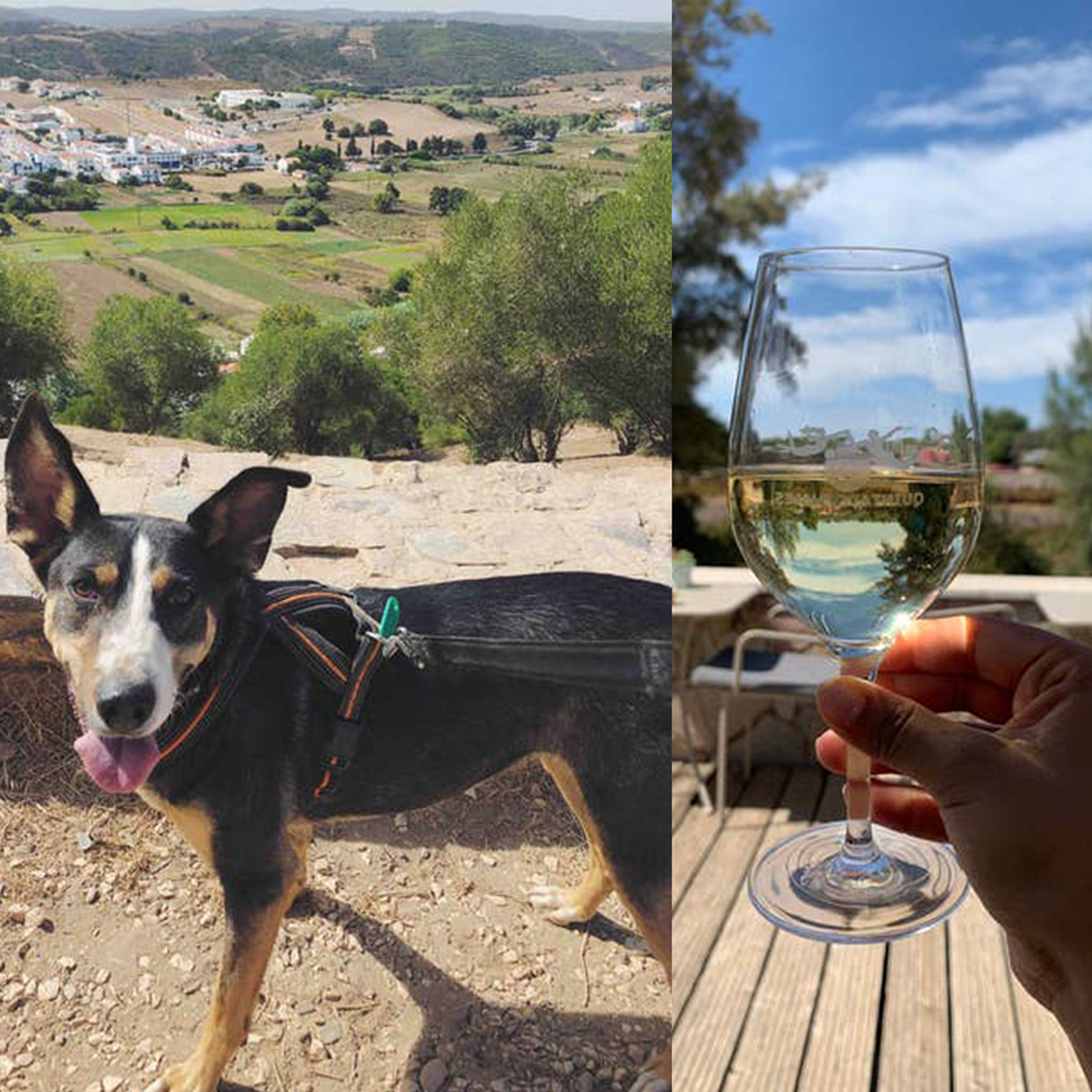 You Can Take Shelter Dogs Out for the Day at a Winery and Beach in Portugal