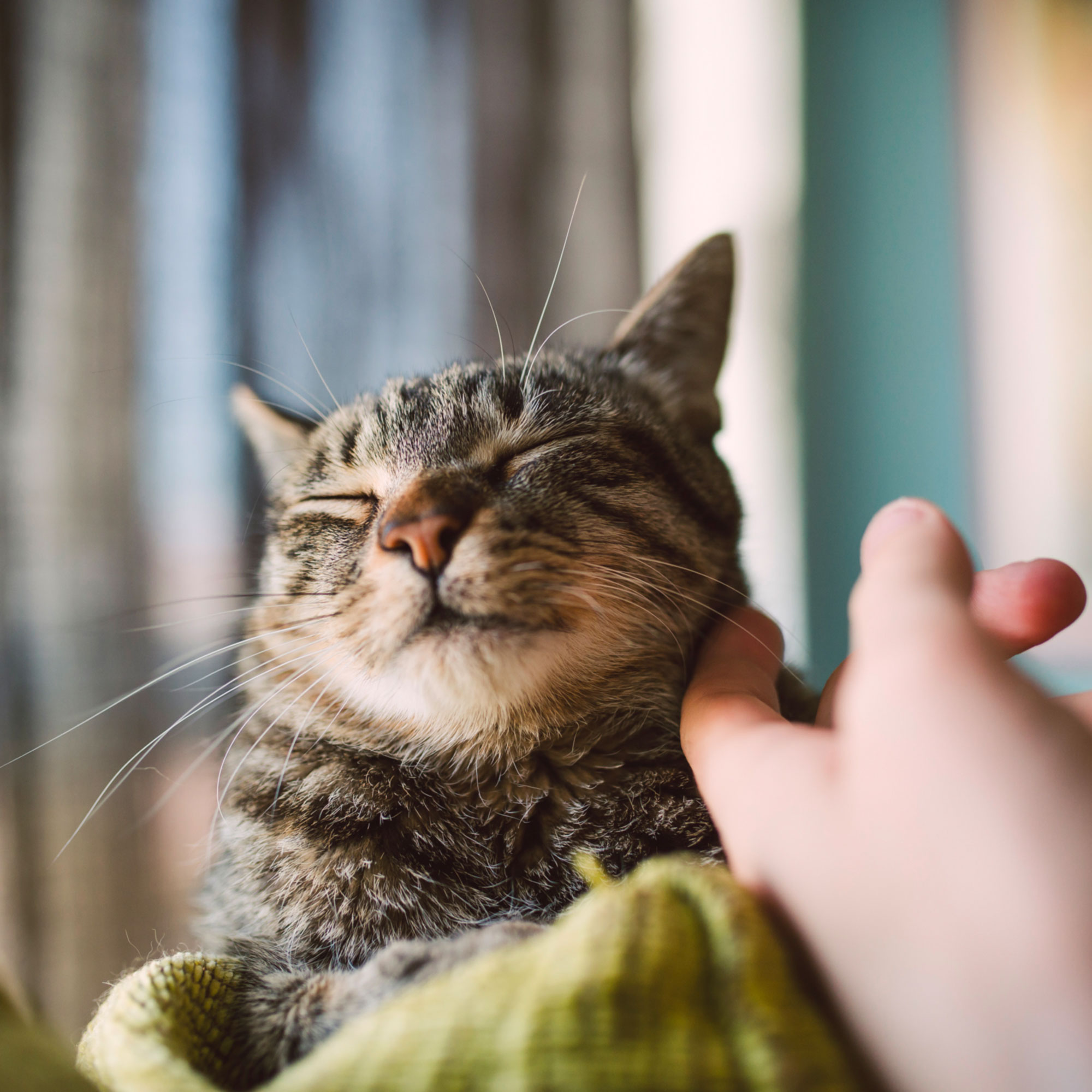 Your Cat Has a Much Deeper Emotional Connection to You Than You Might Think