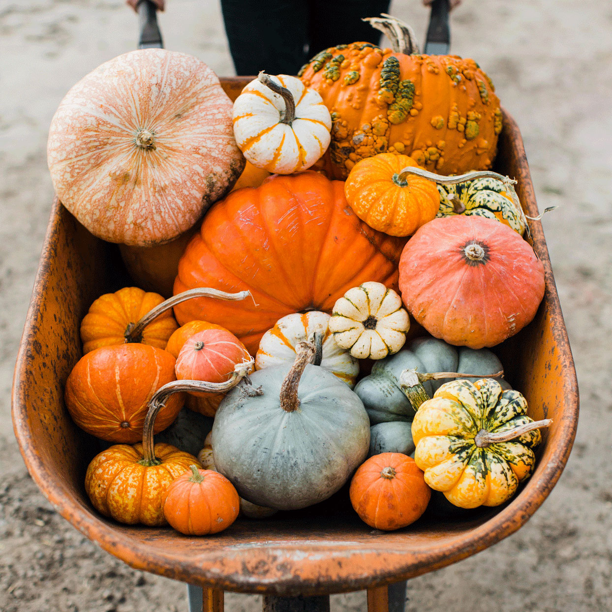 Everything You Need to Know About Pumpkins